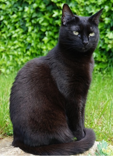 Katzen: Wie impft man